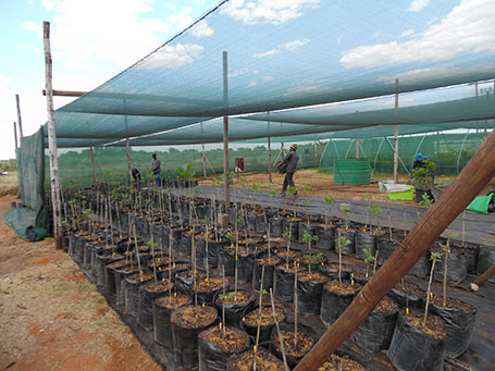Transplanting into bags
